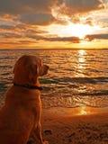 Het letten op van de hond zonsondergang Stock Afbeeldingen