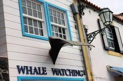Het letten op van de walvis teken Stock Afbeelding