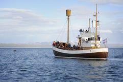 Het letten van een op staart van de gebocheldewalvis Royalty-vrije Stock Fotografie