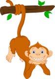 Het leuke aapbeeldverhaal hangen Stock Foto