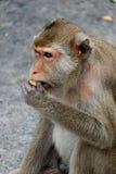 Het leuke aapleven in een natuurlijk bos van Thailand Royalty-vrije Stock Foto's