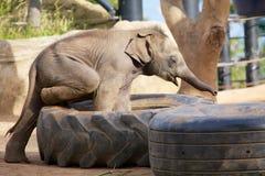 Het leuke babyolifant spelen Royalty-vrije Stock Afbeeldingen