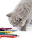 Het leuke Britse katje spelen met geïsoleerdek potloden Royalty-vrije Stock Afbeelding