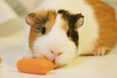 Het leuke en grappige proefkonijn eet een wortel Stock Foto