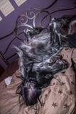 Het leuke Engelse Zetterhond spelen in een bed Stock Foto