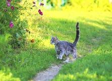 Het leuke grappige katje in een de zomer zonnige tuin vangt een vliegende oranje vlinder in duidelijk weer in groen gras op bloem royalty-vrije stock foto's