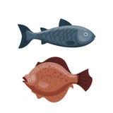 Het leuke grappige zwemmende grafische dierlijke karakter van het vissenbeeldverhaal en onderwater oceaan aquatisch de vin zeewat Royalty-vrije Stock Foto's
