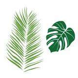 Het leuke groene tropische ontwerp van het bladerenbeeld stock illustratie