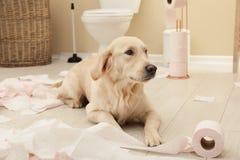 Het leuke hond spelen met toiletpapier in badkamers stock afbeeldingen