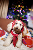 Het leuke hond stellen Royalty-vrije Stock Fotografie