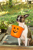 Het leuke Hond Truc of Behandelen Stock Fotografie