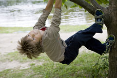 Het leuke jongen hangen van tak van boom. Royalty-vrije Stock Afbeeldingen