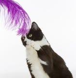 Het leuke kat spelen met veer Stock Foto's