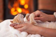 Het leuke katje enhoy petting van eigenaar die - in vrouwenhanden liggen, sha stock fotografie