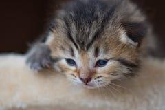 Het leuke katje spelen Stock Fotografie