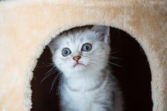 Het leuke katje spelen Royalty-vrije Stock Afbeeldingen