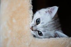 Het leuke katje spelen Royalty-vrije Stock Foto's