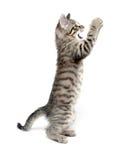 Het leuke katje spelen op witte achtergrond stock foto's