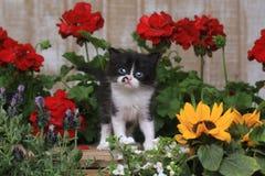 Het leuke Katje van de 3 week oude Baby in Tuin het Plaatsen Royalty-vrije Stock Afbeeldingen