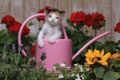 Het leuke Katje van de 3 week oude Baby in Tuin het Plaatsen Stock Afbeeldingen