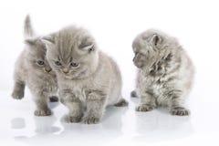 Het leuke katjes spelen Royalty-vrije Stock Foto