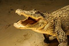 Het leuke Kijken Krokodil stock foto
