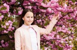 Het leuke kind geniet van aard op de lentedag Aromatisch bloesemconcept Meisjestoerist het stellen dichtbij sakura Tedere bloei K stock afbeeldingen
