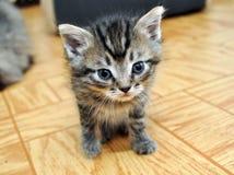 Het leuke kleine katje kijken Royalty-vrije Stock Afbeelding