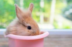 Het leuke kleine lichtbruine verblijf van het konijntjeskonijn binnen roze badkuip op houten lijst met groene aardachtergrond royalty-vrije stock foto's