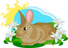 Het leuke konijntje zit Stock Afbeeldingen