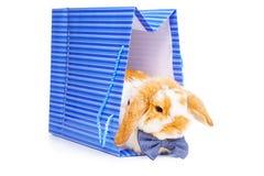 Het leuke mannelijke konijntje met blauwe boog zit in huidige zak Stock Afbeelding