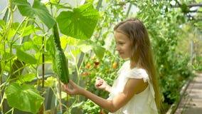 Het leuke meisje verzamelt gewassenkomkommers en tomaten in serre stock videobeelden