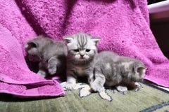 Het leuke onlangs geboren katjes spelen Royalty-vrije Stock Foto's