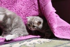 Het leuke onlangs geboren katjes spelen Stock Afbeeldingen