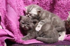Het leuke onlangs geboren katjes spelen Royalty-vrije Stock Afbeeldingen