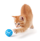 Het leuke oranje katje spelen met een stuk speelgoed royalty-vrije stock afbeeldingen
