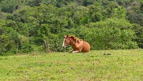 Het leuke paard ligt op het gebied stock video
