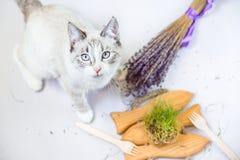 Het leuke portret van de kattenlevensstijl met organisch beschikbaar vaatwerk royalty-vrije stock foto