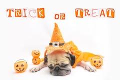 Het leuke Pug rust van de Hondslaap en tong plakken uit met de Gelukkige dag en de pompoen van Halloween Stock Fotografie