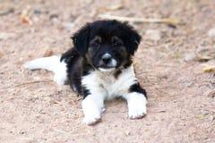 Het leuke puppy liggen Royalty-vrije Stock Foto