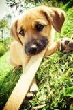 Het leuke puppy spelen op het gras. royalty-vrije stock fotografie