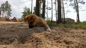 Het leuke puppy ving en at mier stock video