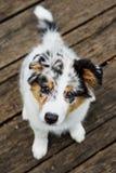 Het leuke puppy ziet eruit Stock Foto