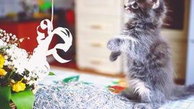 Het leuke speelse Maine Coon-gekleurde kattenblauw zit dichtbij de mand met mooie bloemen 1920x1080 stock video