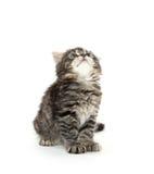 Het leuke tabby katje spelen op wit Royalty-vrije Stock Foto's
