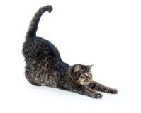 Het leuke tabby katje uitrekken zich Royalty-vrije Stock Foto