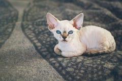 Het leuke wit weinig katje zit op warme plaid Stock Fotografie