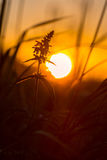 Het leunen naar de zon Stock Foto's