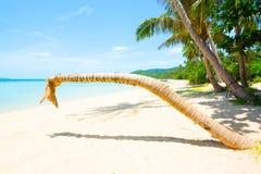 Het leunen van geen hoofdkokosnotenpalm op het strand Royalty-vrije Stock Afbeeldingen