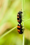 Het leven 1 van insecten Stock Foto